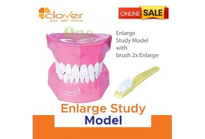 Enlarge Study Model